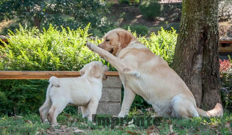 classi-per-cuccioli-educazione-cane-arezzo