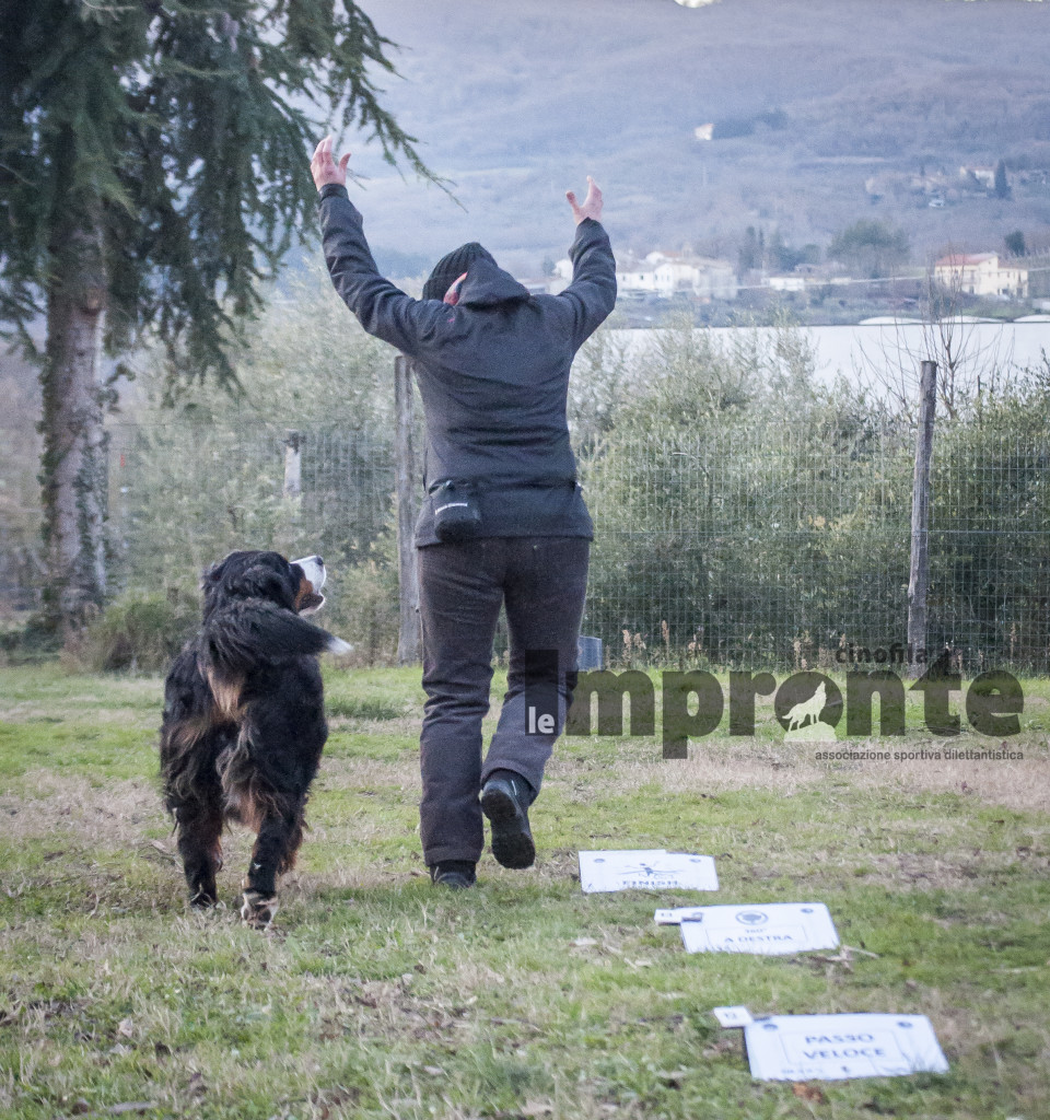 rally-obedience-gara-sport-cinofili