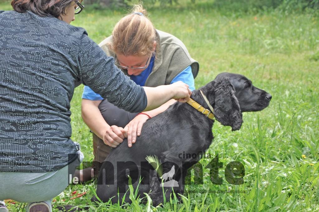 visite-osteopatiche-cani-cinofila-le-impronte-arezzo