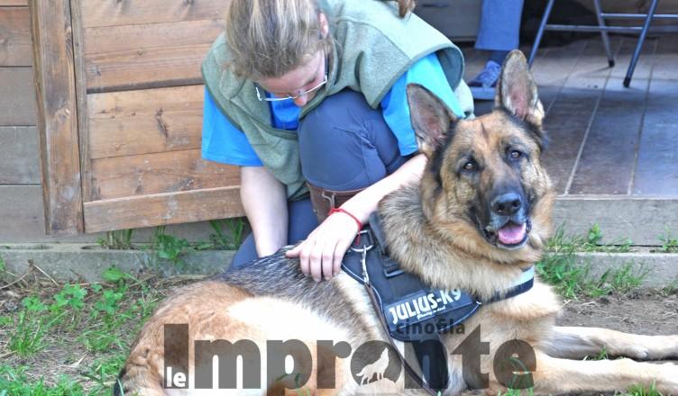 osteopatia-per-cani-arezzo
