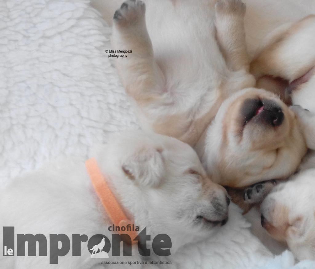 Mamma serena per cuccioli sereni